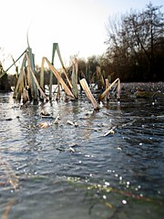 ice cold in sussex (oblivion head) Tags: trees ice reeds bokeh january freezing naturereserve cantfeelmyfingers woodsmill sussexwildlfetrust