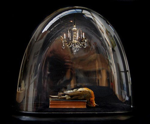 Testament par Polly Morgan, Fine Art Taxidermy