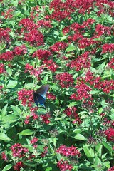 cheekwood botanical gardens (courtneysmilestoo) Tags: flowers nature butterfly nashville