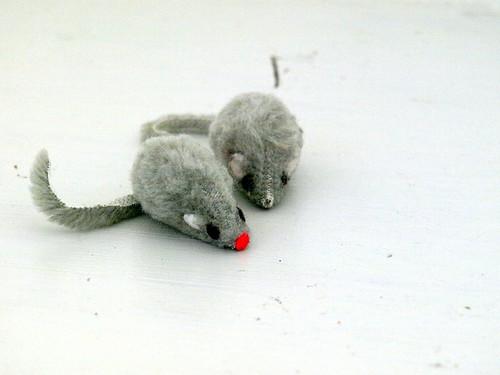 mäuse1