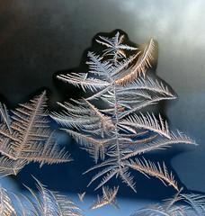 Ice Crystal tree with Star on the Top (photoholic1) Tags: christmas winter macro tree window closeup frost icecrystal iceflowers icepattern mywinners flickrdiamond