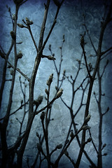 gloaming (tamelyn) Tags: blue sky texture branches layers twigs tangle