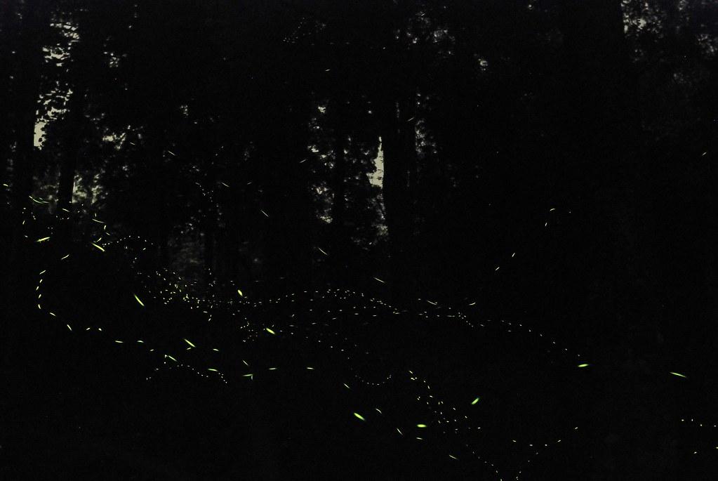 20100417螢火蟲之旅-20.jpg