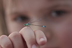 Schau gut hin..... (Peonia69) Tags: libelle insekt kleinewilde