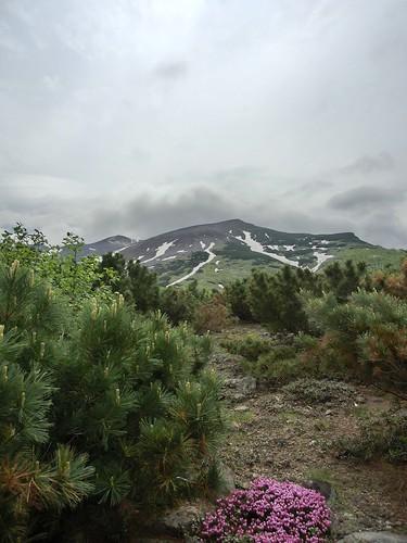 エゾノツガザクラと前十勝岳