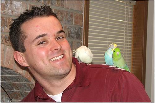 parrot training, parrotlets, training parrotlets