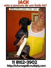 Jack (Adoes G.A.T.A.) Tags: co cachorro viralata srd adoo adote bichodeestimao