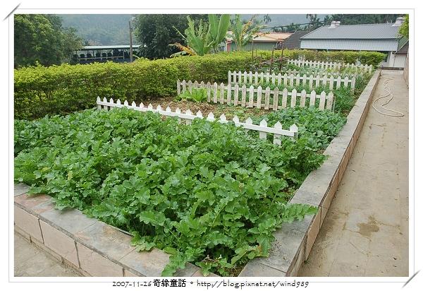 DSC_9912和興國小_菜園
