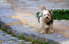 Birine Mi Baktnz? / Are You Looking For Someone? (syrsln / ibo guido) Tags: dog turkey relax march nikon tour trkiye guide dslr 2008 mart bozcaada gezi kpek anakkale objektif d80 kartpostal enstantane rehber deklanr syrsln flickrturkey flickrloversflickrsevenler