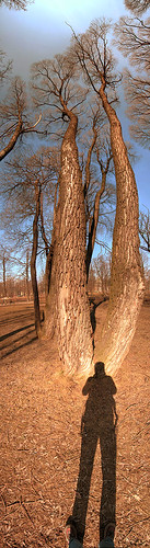treememore
