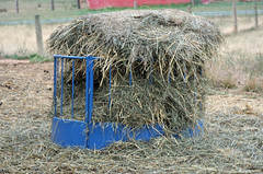 A full hay feeder