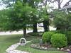 Trees-Bald Cypress, Slash Pine 003-1