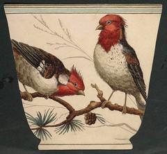 tasse oiseaux