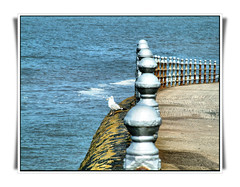 Wrong side of the fence (Ron in Blackpool) Tags: fence interesting looking post gulls rail ron explore railing blackpool curtis irishsea supershot explored inexplore roninblackpool roncurtis