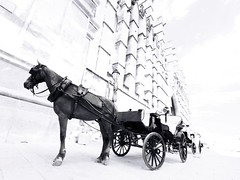 The Whitechapel driver (Sator Arepo) Tags: blackandwhite bw horse london coach carriage cathedral gull olympus conspiracy infrared driver highkey whitechapel mallorca zuiko jacktheripper palmademallorca e500 netley 714mm hackneycarriage zd714mm visiongroup stephenknight vision100 gettyimagesspainq1 iberiastreets gettyimagesiberiaq3