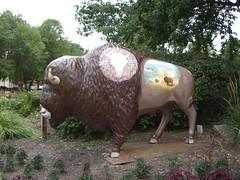 Oklahoma Buffalo (aimeedars) Tags: spiritofthebuffalo buffalo ardmore ok oklahoma aimeedars tree art public geotagged paintedbuffalo paintedsculpture painted statue