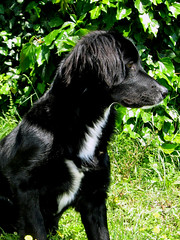 bella Pigna (_Isabella_) Tags: dog black cane loveit pas crno