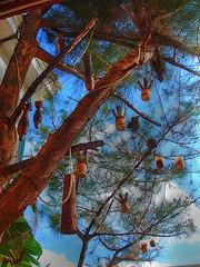 Christmas Tree (Kumar nav) Tags: lao pdr xieng phonsavan khouang