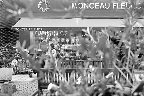 MONCEAU FLEURS - Marie Claire Ave.