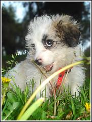 Devorando mi macro (Errlucho) Tags: dog perro cachorro hermosa mascota cosita perrita peluda errlucho