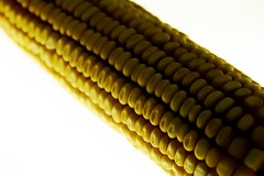 Ear of corn (Sphinx!) Tags: yellow corn amarillo ear groc mazorca maz earofcorn blatdemoro panotxa pans thebestofday gnneniyisi panotxadeblatdemoro estopareceunafotodenachopop mazorcademaz