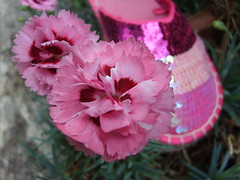 Pretty in Pink (Arty Guerillas) Tags: pink flower shoe pretty escape notes lovers identity prettyinpink furs psyhedelic artspotters