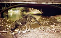 perro.. (Juampa..) Tags: argentina puente reflex buenosaires minolta perro bosque analogica laplata 303si safarilp safarilpcitytour