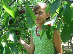 Abby picking cherries