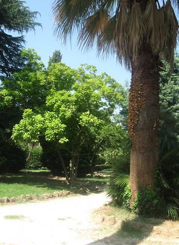 villa (parc) Sciarra à Rome, bonne nuit dans image bon nuit, jour, dimanche etc.