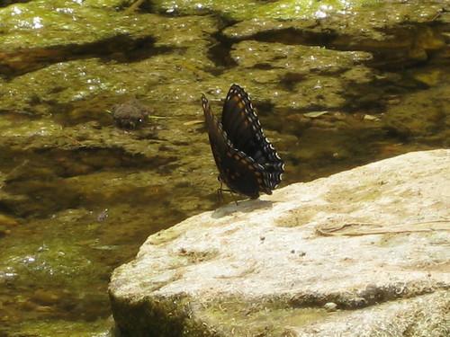 Butterfly_0444