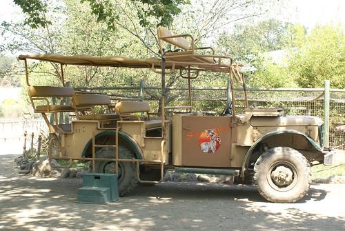 safari2
