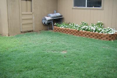 Yard Growing Because of Rain