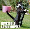 cat-invisible-lawnmower (DiscoWeasel) Tags: cat feline funny lol invisible misc internet humor kitty meme lawnmower noob wastesometime