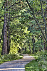 A Walk in the Woods (JNad) Tags: trees green nature bike digital forest canon rebel waterfall illinois glenn glen il trail darien preserve xsi topaz adjust waterfallglen waterfallglenforestpreserve waterfallglenn 450d rebelxsi topazadjust