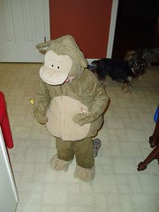 Nico as a Monkey. (tbertor1) Tags: nico tulio bertorini tuliobertorini