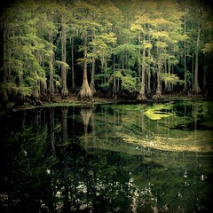 Tallahassee Swamps (tangent) Tags: florida swamp algae tallahassee cypresstrees archivedigging