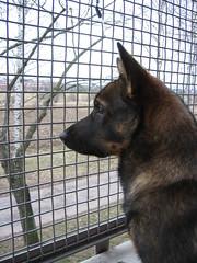 IMG_2289 (Niina J.) Tags: eläimet koirat osmo