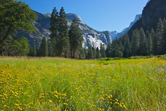 Sentinel Meadow Another View (Paraic Brennan) Tags: california usa yosemite canon1022mm route49 boylecameraclub