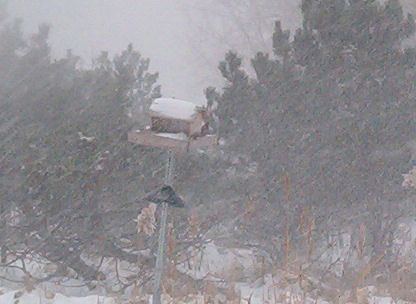 bird feeder during storm