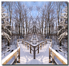 Left or Right (Lisa-S) Tags: blue trees winter sky snow ontario canada mirror shadows lisas symmetry explore boardwalk mirrorimage allrightsreserved brampton heartlake invited tistheseason conservationarea 3304 trca nov09 theunforgettablepictures torontoregionconservationauthority tisexcellence copyrightlisastokes gappool getty2012 getty20120125