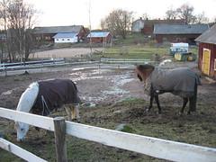 IMG_2981 (Niina J.) Tags: eläimet koirat osmo