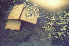 (yyellowbird) Tags: flowers daisies vintage lights book victorian sparkly photoalbum