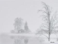 "Stormy white winter (Bessula) Tags: winter white snow storm cold water landscape frost country natur soe littlestories supershot fineartphotos specialpicture platinumphoto anawesomeshot szczęśliwegonowegoroku diamondclassphotographer flickrdiamond bessula proudshopper theperfectphotographer goldstaraward picswithsoul ""ourmasterpieces rubyphotographer goldenheartaward bestofthbest sensationalphoto ""flickraward"" thedantecircle"