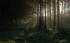 Fairy Tale Woodland (D.Reichardt) Tags: trees mist nature fog forest woodland germany europe rays mystic naturelovers faiytale bramstedt