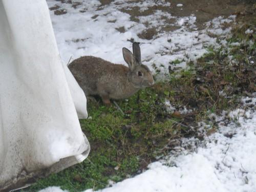 al parco sotto la neve