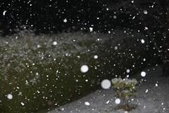 Catch a falling snowflake