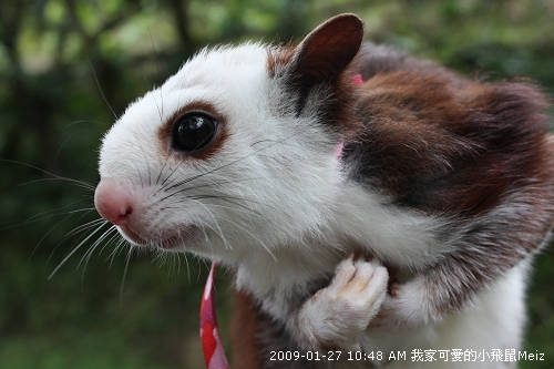09春節小飛鼠Meiz的花蓮行 (2).JPG