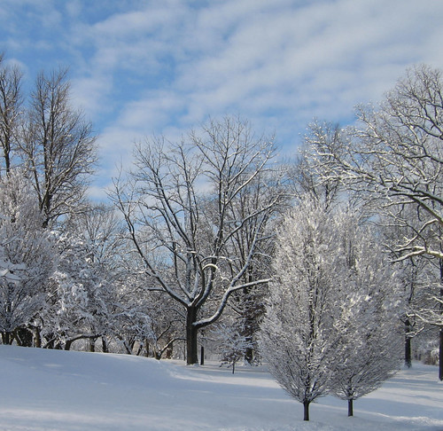 Nature - snowy trees 1