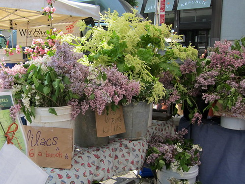 Lilacs at the Union Square Greenmarket