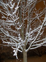 feb 25 snow (5) (Rich pix) Tags: snow feb25 parkforest